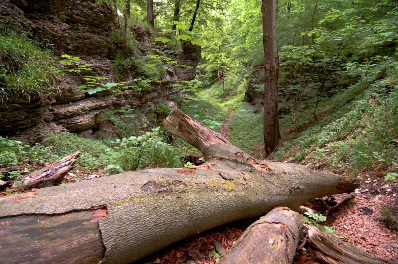 Weg zur Bielsteinhöhle